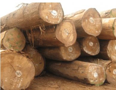 đặc điểm của gỗ tự nhiên