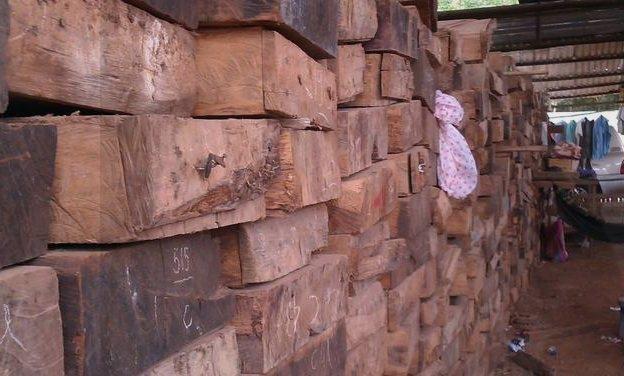 tìm hiểu về gỗ cẩm