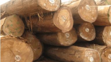 Đặc điểm gỗ tự nhiên trong trang trí và sản xuất đồ nội thất